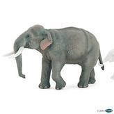 Slon indický